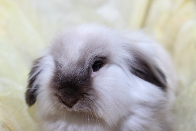 american-fuzzy-lop