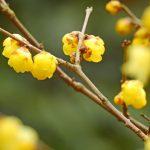 birth-flower