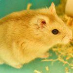 newton-hamster
