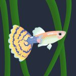 guppy-old-fashion-ivory-mosaic