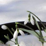 february-26-birth-flower