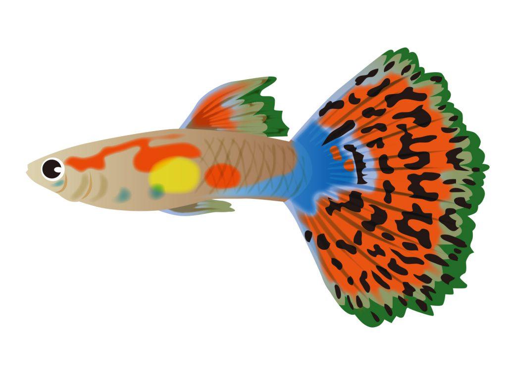 guppy-turquoise-mosaic