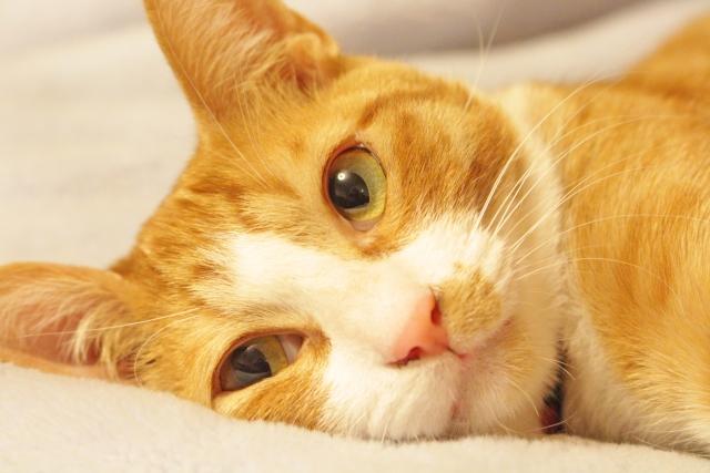 february-22-cat-day