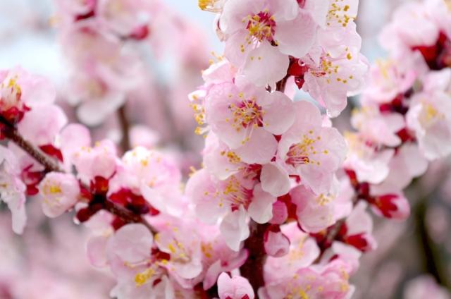 march-1-birth-flower