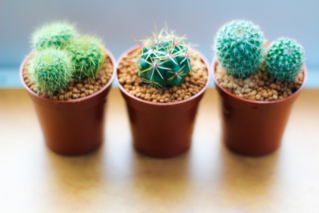 march-10-cactaceae-day