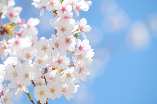day-origin-of-the-cherry-tree-of-march-27