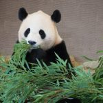 march-11-panda-discovery-day
