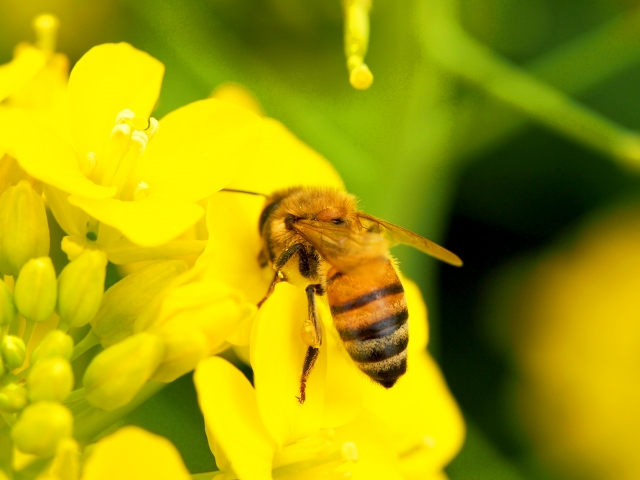 march-8-bee-day